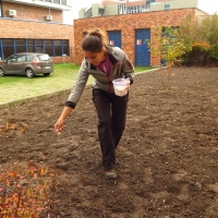 Autumnal sowing of the seed mixture (Biology centre)