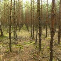 Stráž nad Nežárkou: forestry-driven reclamation