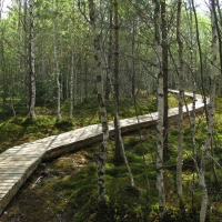 Nature trail on a revitalized peat bog