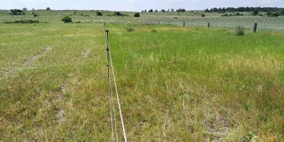Grazed (left) and ungrazed (right) plots in the former arable field