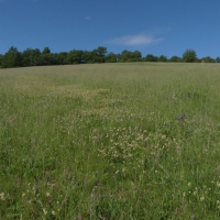 Meadow in White Carpathians - 10 years after restoration